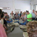 Laxe Commercial Fish Auction
