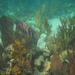 Glovers Reef and Twin Cays 019