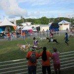 Goat Racing 036